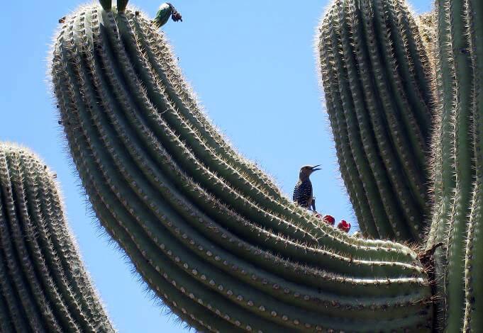 desert-pueblo-mobile-home-park-bird
